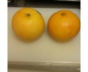 自家製グレープフルーツサワードリンク