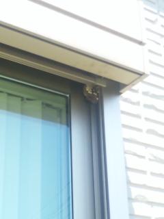 蜂の巣駆除(写真)